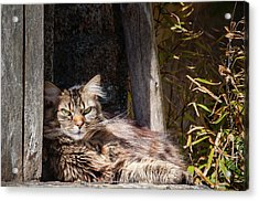 Just Lazing Around Acrylic Print