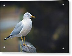 Acrylic Print featuring the photograph Looking Forward by Cindy Lark Hartman