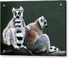 Just Lovin This Tall Tail Acrylic Print