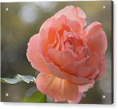 Acrylic Print featuring the photograph Just Peachy by Julie Andel