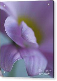 Just Petals Acrylic Print