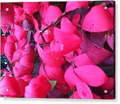 Just Red/pink Acrylic Print