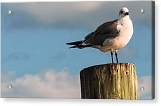 Just Standing On The Dock Acrylic Print by Phillip Burrow