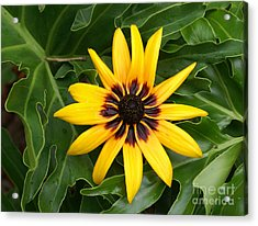Just Sunning Acrylic Print by Debbie May