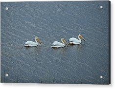 Triple Pelicans Lake John Swa Co Acrylic Print