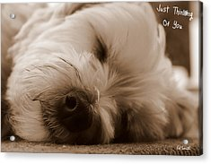 Just Thinking Of You Acrylic Print by Ed Smith