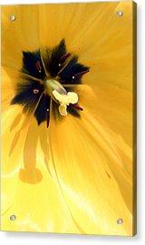 Just Tulip Acrylic Print