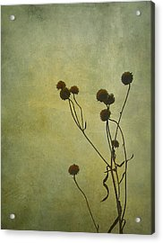 Just Weeds . . . Acrylic Print