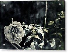 Justitita Acrylic Print by Nicole Frischlich