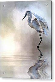 Juvenile Heron Acrylic Print