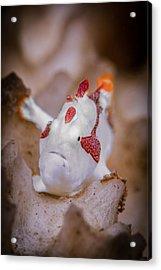 Juvenile Warty Frogfish Acrylic Print