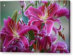 K And D Lilly 4 Acrylic Print