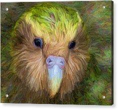 Kakapo Acrylic Print