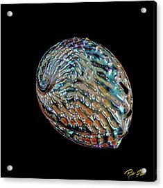 Acrylic Print featuring the photograph Kaleidoscope Abalone by Rikk Flohr