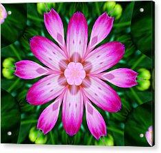 Kaleidoscope Of A Dahlia Acrylic Print by Cathie Tyler