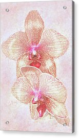 Kaleidoscope Orchid  Acrylic Print by Jane Schnetlage