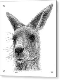 Kangaroo Acrylic Print