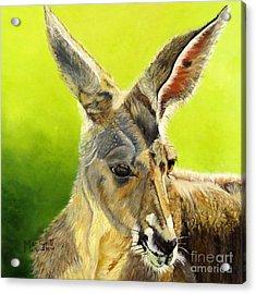 Kangeroo Acrylic Print