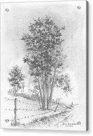 Kansas-cottonwood Acrylic Print