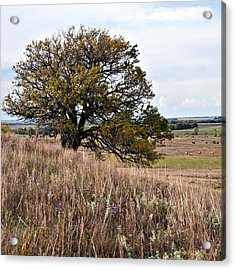 Kansas One Tree Hill Square Acrylic Print