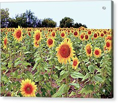 Kansas Sunflower Field Acrylic Print
