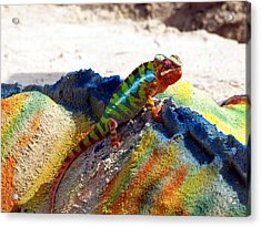 Karma Kameleon  Acrylic Print