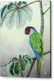 Acrylic Print featuring the painting Kasanga Bajo El  Guarumo by Ceci Watson