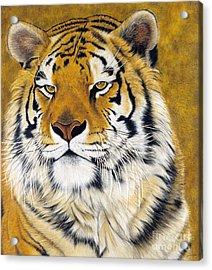 Kato Acrylic Print by Lawrence Supino
