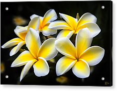 Kauai Plumerias Large Canvas Art, Canvas Print, Large Art, Large Wall Decor, Home Decor, Photograph Acrylic Print by David Millenheft