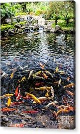 Kauai Koi Pond Acrylic Print