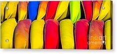 Kayak Pano Acrylic Print by Jerry Fornarotto