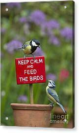 Keep Calm And Feed The Birds Acrylic Print