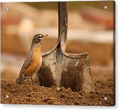Keep Digging Acrylic Print by Don Wolf