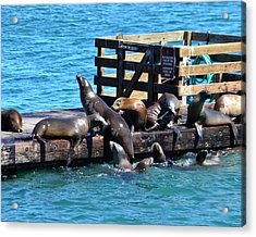 Keep Off The Dock - Sea Lions Can't Read Acrylic Print