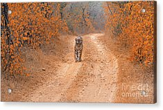 Keep Walking Acrylic Print