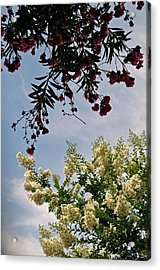 Keeping In Touch Acrylic Print by Bonnie See