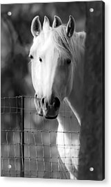Acrylic Print featuring the photograph Keeping Their Eyes On Us D3126 by Wes and Dotty Weber