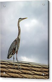Keeping Watch Acrylic Print