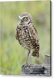 Keeping Watch Acrylic Print by Keith Lovejoy