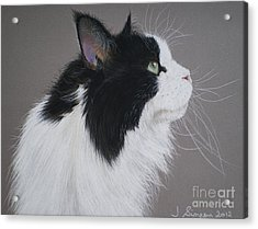Keeps - Maine Coon Acrylic Print by Joanne Simpson