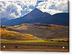 Keller Mountain Grazing Acrylic Print by Chris Allington