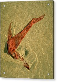 Acrylic Print featuring the photograph Kelp 2 by Art Shimamura