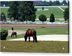 Kentucky Horse Park - Horses Grazing 2 Acrylic Print by Thia Stover