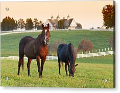 Kentucky Pride Acrylic Print by Alexey Stiop