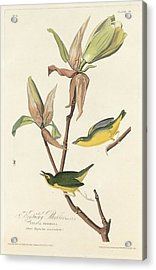 Kentucky Warbler Acrylic Print by Dreyer Wildlife Print Collections