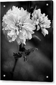 Kerria In Black And White Acrylic Print