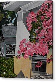 Key West Bougainvillea Acrylic Print by John Schuller