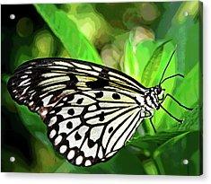 Key West Butterfly 2 Acrylic Print