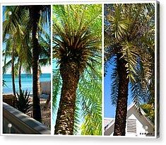 Key West Palm Triplets Acrylic Print by Susanne Van Hulst