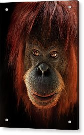 Kiani Acrylic Print by Animus Photography